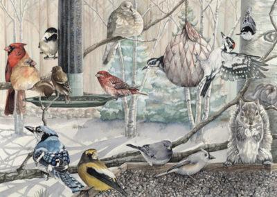 Chris Rowlands-Backyard Birds