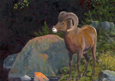 DeVere Burt-Alpine Prince Big Horn Ram