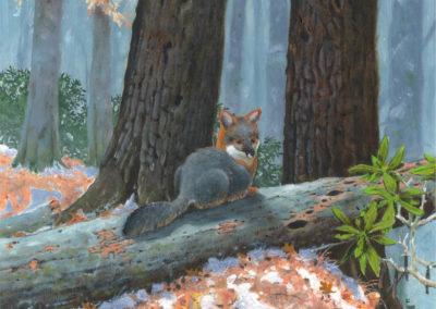 DeVere Burt-Winter recess Gray Fox
