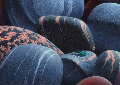 John N. Agnew-Granites and Tiger Beetle