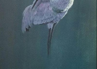 Morten E. Solberg-Sandhill Crane Study